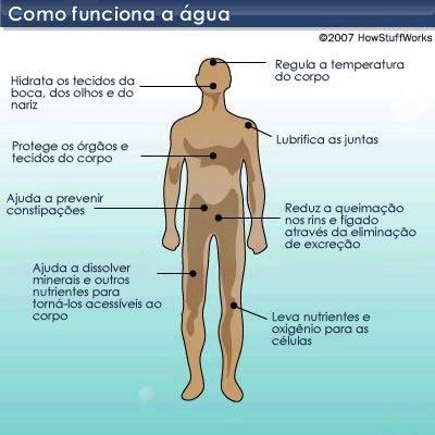 grafico-funcao-da-agua-no-corpo