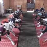 fotos do projeto de ioga na áfrica