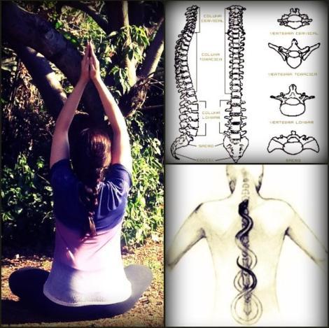 coluna-vertebral-alicerce-da-vida-yoga-ioga