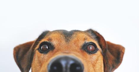 Inspiração Meu cachorro chamado Karma